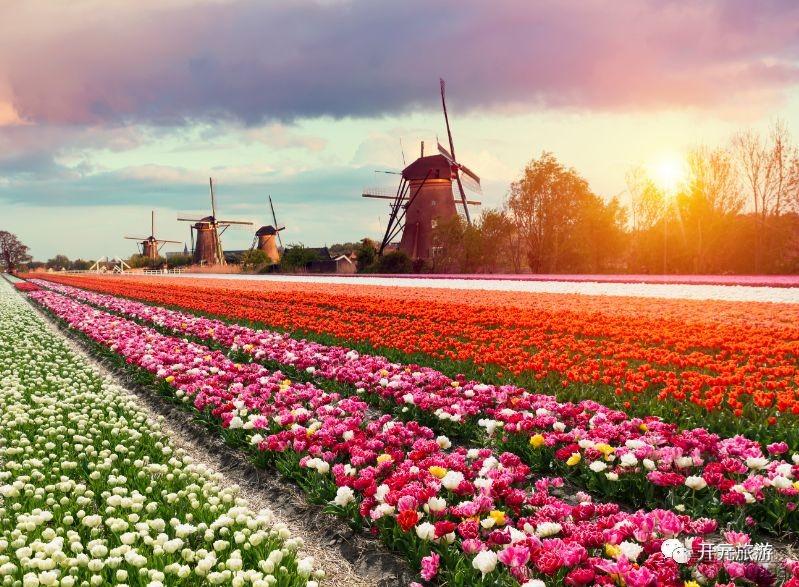 开元2018荷兰赏花之旅